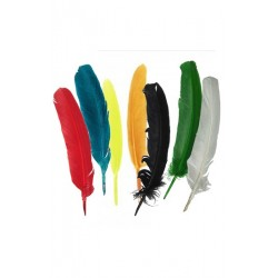 12 plumes multicolores